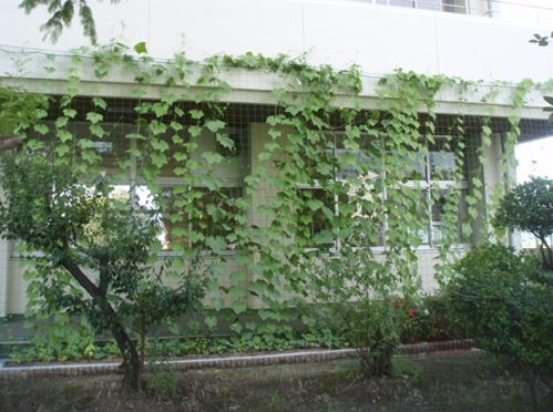 2010年8月01日日曜日 昭和小学校